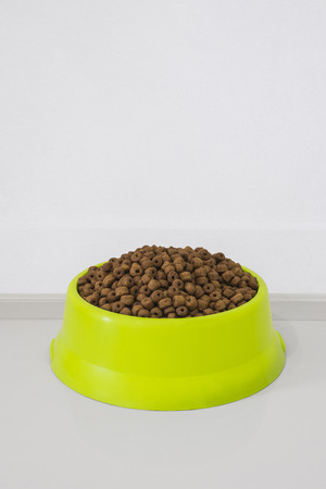 green bowl with dry food for dog or cat in clear background with copy space.