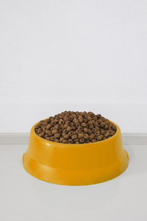 orange bowl with dry food for dog or cat in clear background with copy space.