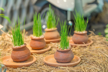 the flora: flora in pots on straw. Stock Photo