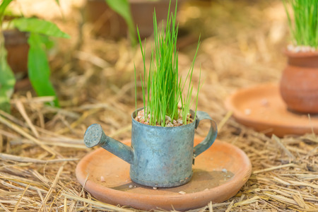 flora: flora in pots on straw. Stock Photo