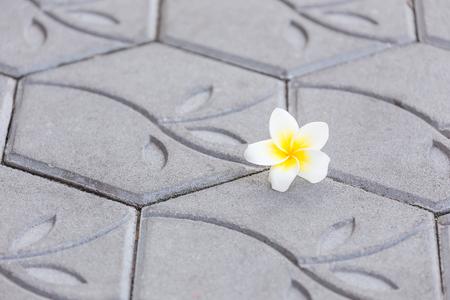 White plumeria fall on a cement blog floor. Standard-Bild