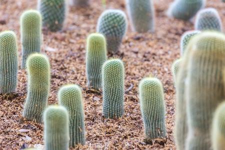Beautiful cactus cultivation in a botanical garden. Standard-Bild