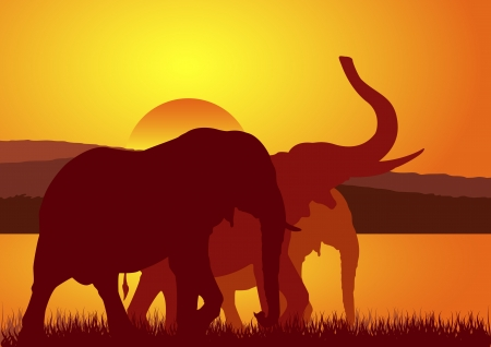 Stock Vector Illustration of Elephants walking on Sunset Vector