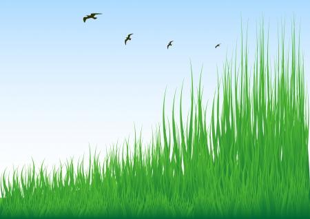 chaume: Stock Vector Illustration de la prairie verte