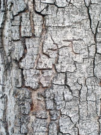The bark of the tree Stock Photo