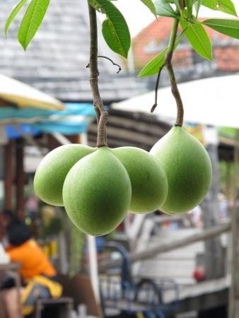 Cerbera odollam at water market, Pattaya, Thailand
