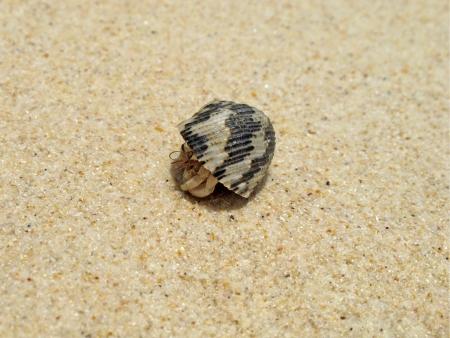 Bernardo-eremita na praia