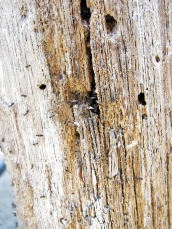 formigas coletar sua comida em formiga