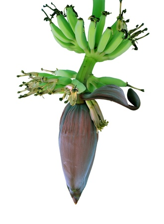 banana blossom and bananas bunch isolate on white background Stock Photo