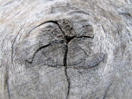 texture of old tree stump