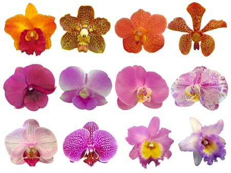 orchid collection on white background photo