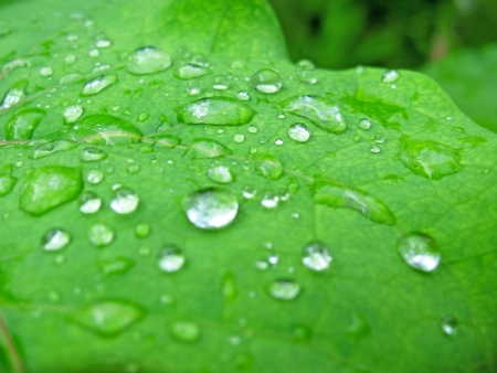 Water drop on green leaf after the rain photo
