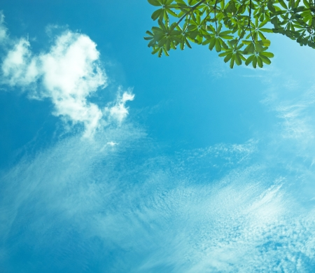blue sky and green tree branch  Stock Photo