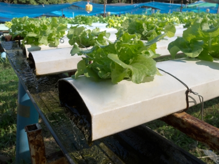 Water system in hydroponic farm