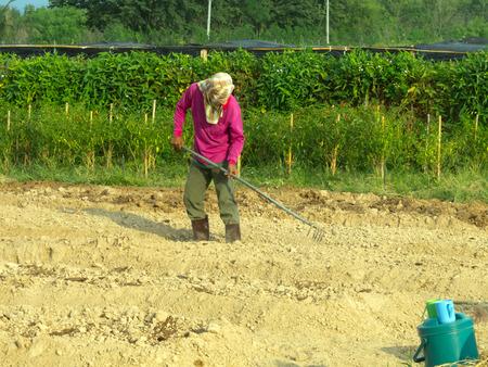 Um homem scarify o solo no plantio em meio  Imagens