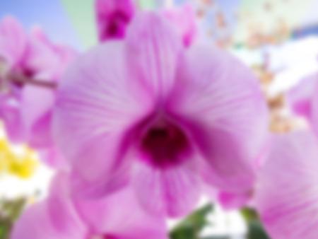 modificar: Orqu�dea rosada en el jard�n de orqu�deas modificar por efecto de desenfoque. Foto de archivo