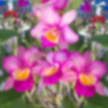modify: Pink orchid in the garden modify by blur effect.