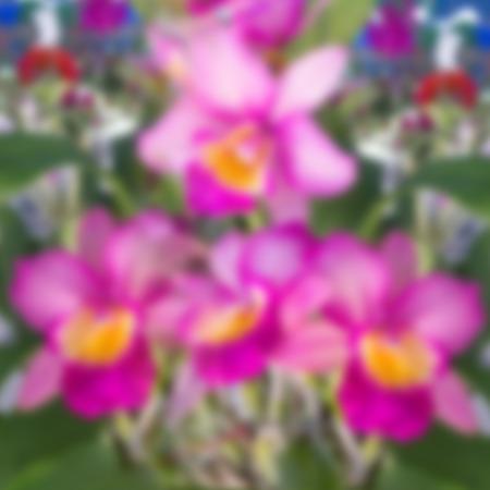 modificar: Rosa orqu�dea en el jard�n modificar por efecto de desenfoque.