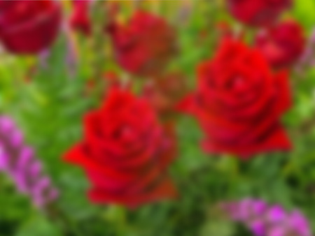 Bouquet of beautiful red roses in blurred effect.