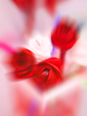 Resumo de fundo de rosas vermelhas na luz branca. Imagens