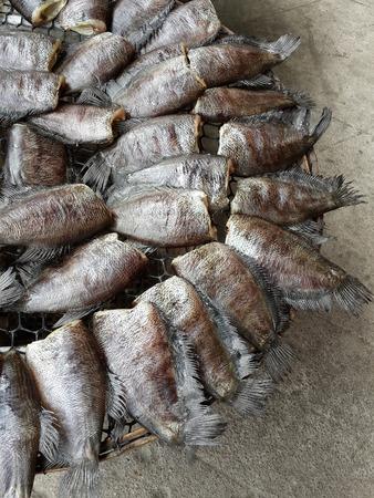 conservacion alimentos: Dry Trichogaster pectoralis fish, food preservation in Thailand. Foto de archivo