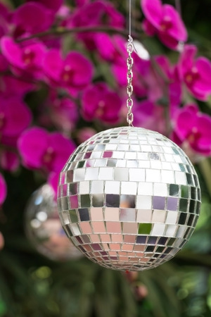 discoball: Disco ball hanging on tree in orchid garden.