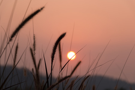 Sunset and mountain view through the grass.