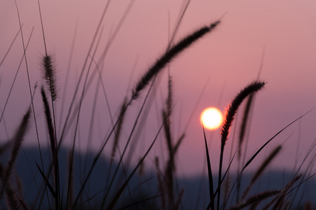 Natural background, view of sunset and pampas.