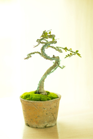 Miniature plant grown in a pot and design its shape by using wire bended like bonsai traditional (soft focus).   Stock Photo