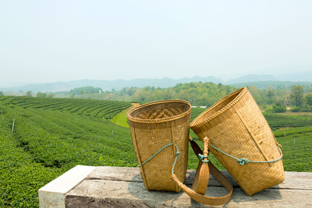 Bamboo baskets for worker to collected green tea leaf when they harvest the top fresh of tea leaf are on wooden table with  background of beautiful green tea plantation.