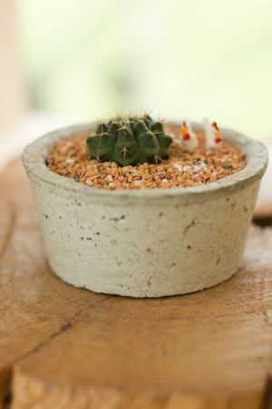 Blurry green cactus in pot with creative idea for decoration.