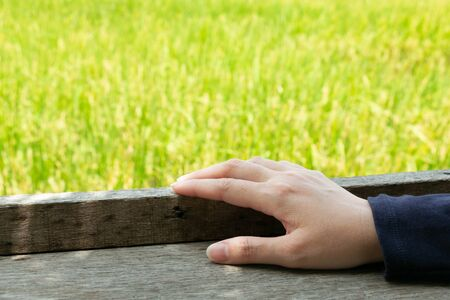 Close-up of a hand holding at wooden window base frame with rice field background; concept of touching the nature. 写真素材