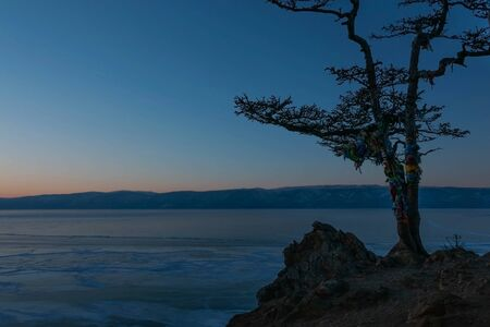 Close-up of Shaman tree on cape Burkhan, Olkhon Island and background of frozen lake Baikal under sunset light in evening.
