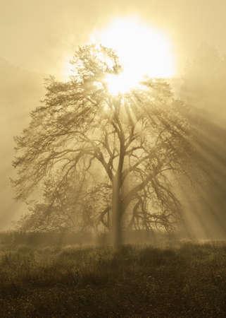 sun bursting through a tree Stock Photo