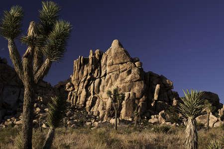 desert landscape in joshua tree national park Stock Photo