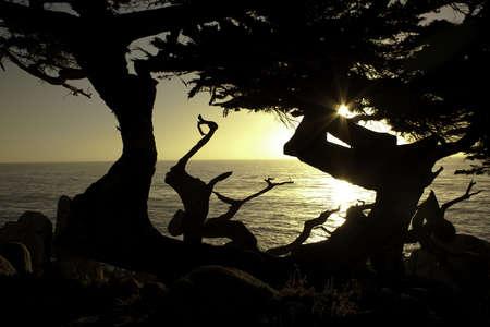 Cypress Tree at Sunset