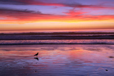 Seagull reflected on the Ocean surf, California photo