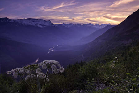 Wild flower and a glacial valley Stock Photo