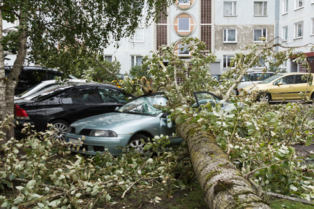 a strong September wind broke a tree that fell on a car parked nearby, disaster background