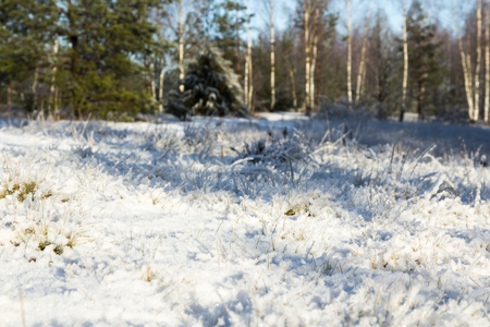 grass covered with snow in sunny day, natural background Stock Photo