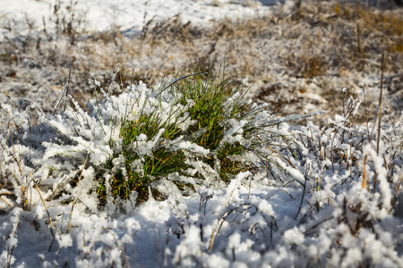 a bunch of green grass covered with snow in sunny day, natural background