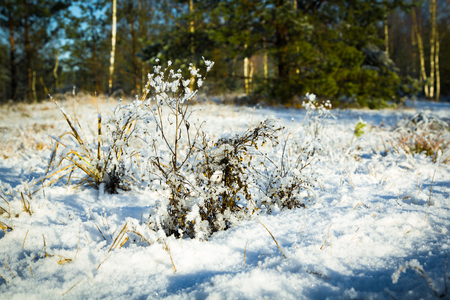 a bunch of grass covered with snow in sunny day, natural background