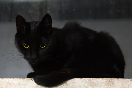 the black cat lies on concrete surface natural background Stock Photo