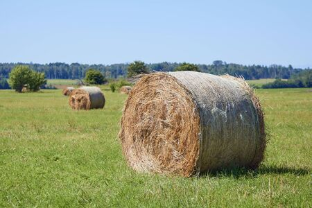 hay rolls on a mowed field in a countryside in summer, on clear day