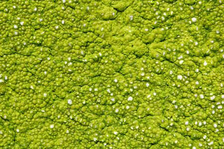 Close-up film of green algae on the surface of the water, preventing the flow of oxygen