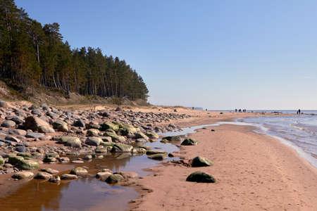 Pines and big stones at Baltic sea rocky shore near Tuja, Veczemju klintis, Vidzeme, Latvia, landscape Stock Photo