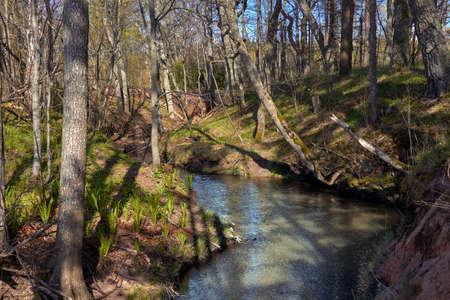 Trees and small river near Tuja, Veczemju klintis, Vidzeme, Latvia, landscape Stock Photo