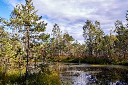 Landscape of swamps in Cenas, Latvia Stock Photo