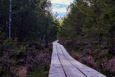Wooden footbridge in swamps in Cenas, Latvia Stock Photo
