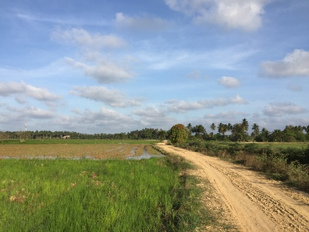 padi: A dirt road connecting villages and rice fields